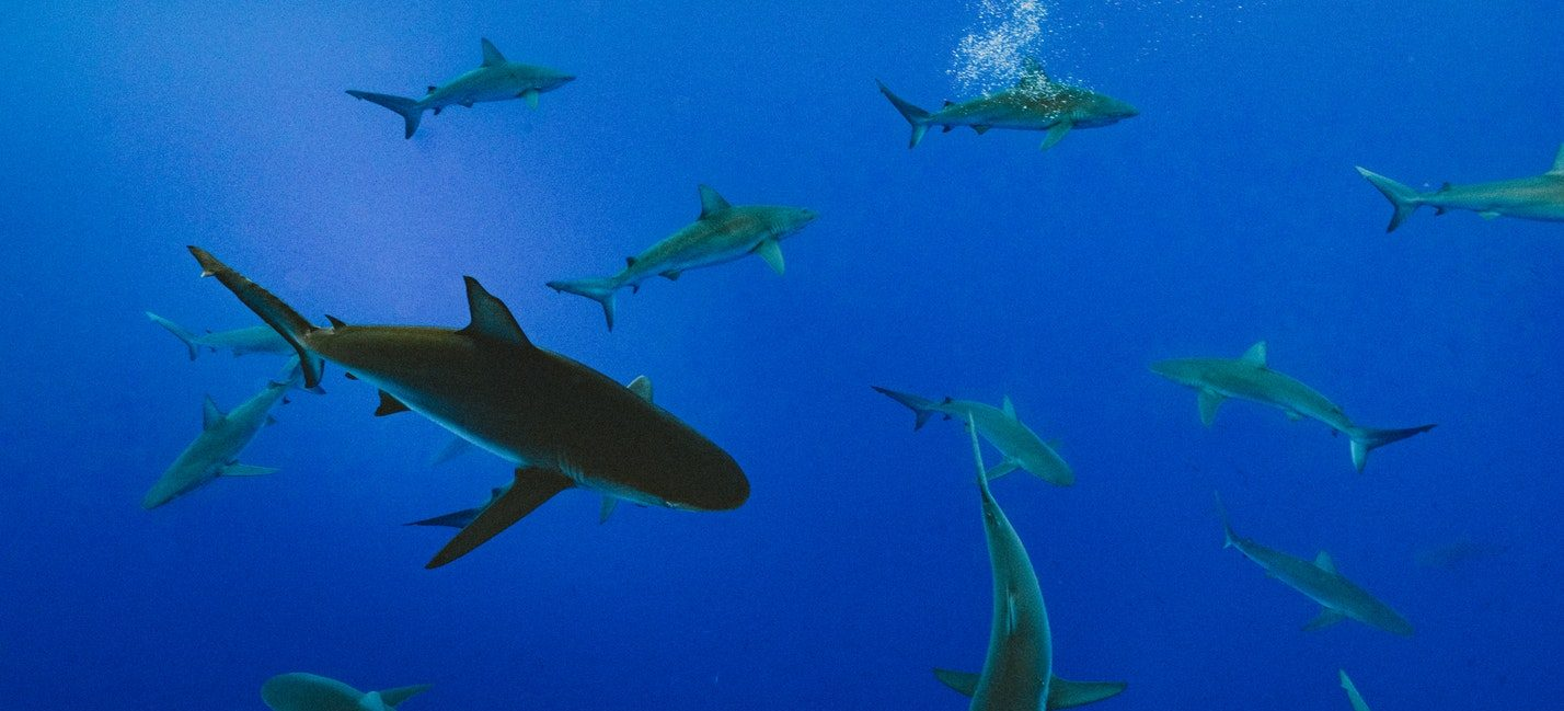 shark-week-without-cable-sharks-swimming-